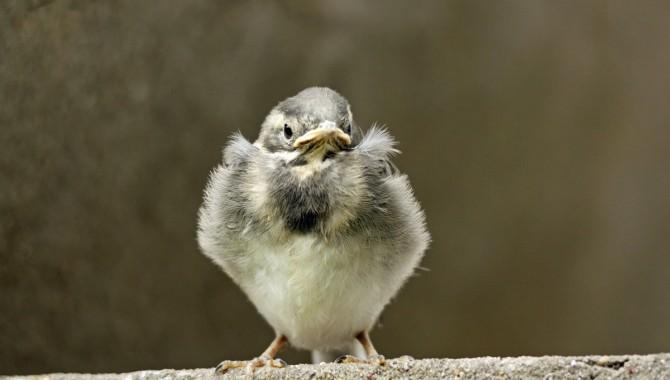 Petit exercice de la semaine : l'oisillon tombé du nid