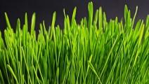 Optimiser la productivité grâce aux plantes vertes