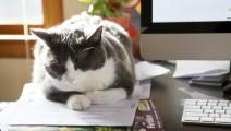 Animal de compagnie au bureau, vraie ou fausse bonne idée ?